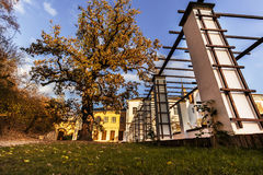 Mighty tree with yellow leaves in autumn. Castle of Lysice Stock Photo
