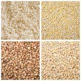 Miglio del grano saraceno dell'orzo del riso Immagini Stock Libere da Diritti