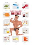 Migliore alimento del muscolo Fotografia Stock Libera da Diritti
