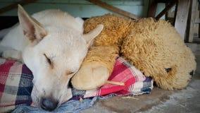 Migliore amico della bambola e del cane Fotografie Stock
