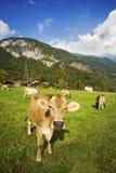 Migliore latte e cioccolato fatti qui Fotografia Stock Libera da Diritti