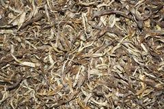 Migliore tè di rosso del germoglio Immagine Stock