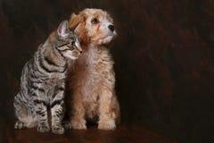 Migliori amici Fotografia Stock