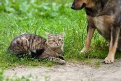 migliori amici del gatto e del cane Fotografie Stock Libere da Diritti