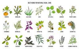 Migliori erbe medicinali per cura facciale naturale Fotografie Stock Libere da Diritti