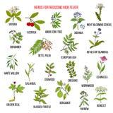 Migliori erbe per la riduzione della febbre alta Immagini Stock