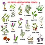 Migliori erbe per trattamento del cancro e la prevenzione illustrazione di stock