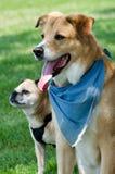 Migliori pals del cane Fotografie Stock