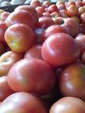 Migliori pomodori del mondo Immagini Stock Libere da Diritti