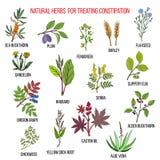 Migliori rimedi di erbe a trattare costipazione illustrazione di stock