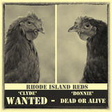 Mignon et Clyde Wanted Poster Photographie stock