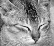Mignon et paresseux photo libre de droits