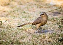 Mignon extérieur d'oiseaux mignons Photos libres de droits