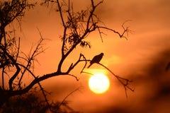 Migocący wieczór pustynia zdjęcie stock