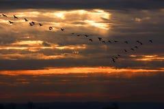 Migração Fotografia de Stock Royalty Free