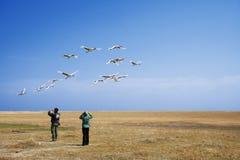 Migração de observação do pássaro Imagem de Stock