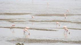 Migração de pássaro nas alterações climáticas vídeos de arquivo
