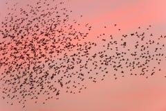 Migração de pássaro no por do sol Fotos de Stock