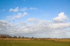 Migração dos gansos Imagens de Stock Royalty Free