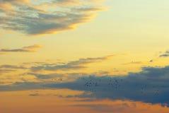 Migração dos pássaros Fotos de Stock