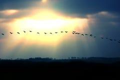 Migración Imagen de archivo libre de regalías