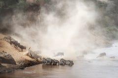 Migración de la cebra y del ñu en África imagen de archivo