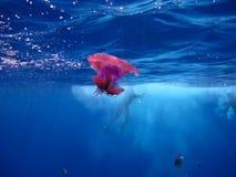 Migración de la medusa Fotos de archivo