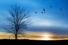 Migración de la primavera o del otoño de grúas Fotografía de archivo libre de regalías