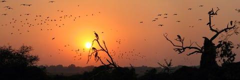Migración de los pájaros Imagen de archivo libre de regalías