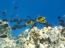 Migración de los pescados Fotografía de archivo libre de regalías