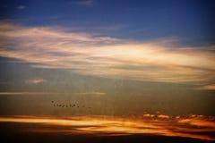 Migración de pájaro Foto de archivo libre de regalías