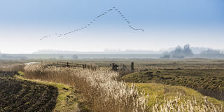 Migración de pájaro fotografía de archivo