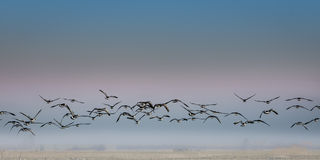 Migración de pájaro fotos de archivo libres de regalías