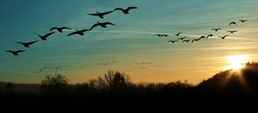 Migración de pájaro en la puesta del sol Fotos de archivo libres de regalías