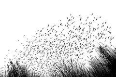 Migración de pájaro en las dunas - en blanco y la imagen blanca fotos de archivo