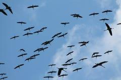 Migración de pájaros en el hula Israel de Agamemnon Imágenes de archivo libres de regalías