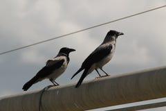 Migración de pájaros en Israel durante invierno Foto de archivo libre de regalías