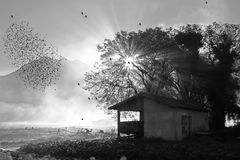 Migración del estornino en la caída en blanco y negro Fotografía de archivo libre de regalías