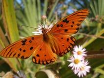 Migración del monarca Foto de archivo libre de regalías
