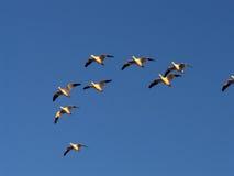 migracja Obraz Royalty Free