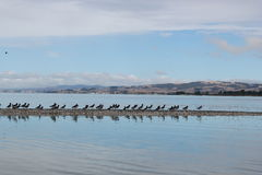 Migrant birds resting as a line Royalty Free Stock Photography
