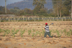 Migrant Farm Worker Off to Work Stock Photography