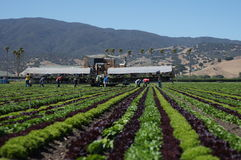 Migrant Farm Workers Royalty Free Stock Photo