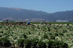 Migrant Farm Workers Royalty Free Stock Image