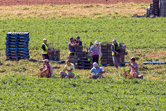 Migrant Farm Workers. Stock Images