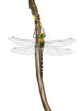Migrant hawker Stock Photos