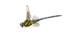 Migrant hawker on white Royalty Free Stock Photos
