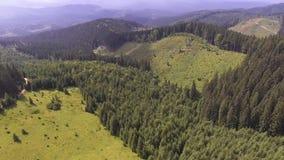Migrar nas montanhas sobre a floresta Carpathian do verão vídeos de arquivo