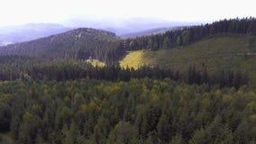 Migrar nas montanhas sobre a floresta Carpathian do verão video estoque