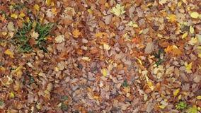 Migrar sobre das folhas de outono filme